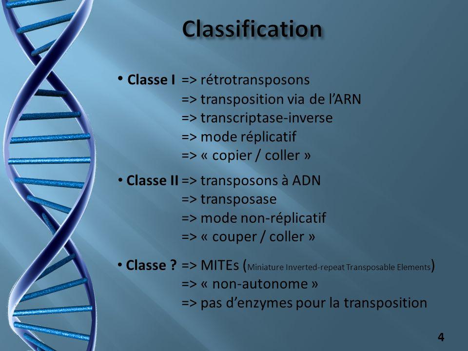 - 17% du génome dArabidopsis thaliana - 45 % du génome de Homo Sapiens - Plus de 50 % du génome de Zea maïs 5 Sc: Saccharomyces cerevisiae; Sp: Schizosaccharomyces pombe; Hs: Homo sapiens; Mm: Mus musculus; Os: Oryza sativa; Ce: Caenorhabditis elegans; Dm: Drosophila melanogaster;….