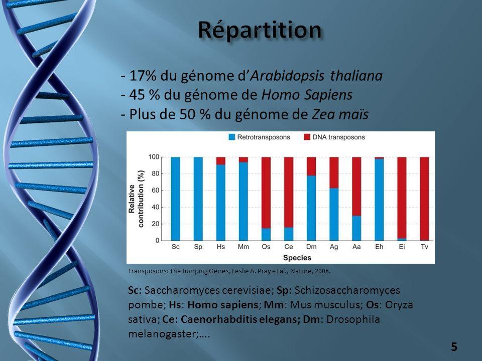 - 17% du génome dArabidopsis thaliana - 45 % du génome de Homo Sapiens - Plus de 50 % du génome de Zea maïs 5 Sc: Saccharomyces cerevisiae; Sp: Schizo
