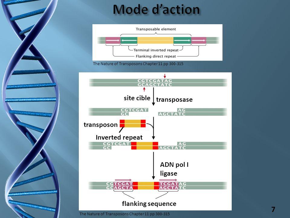 gènes pertubés=> région codante => promoteur => séquences régulatrices => encombrement spatial avantages sélectifs => domaine de fixation à lADN (nouveaux facteurs de transcription) => protéines « hétérologues » 8 Chez la drosophile => insertion transposon copia dans le 2ème intron du gène white perturbe la transcription et provoque lapparition dyeux orange Chez la souris => insertion d un rétrotransposonIAP dans un exon du gène Agouti.