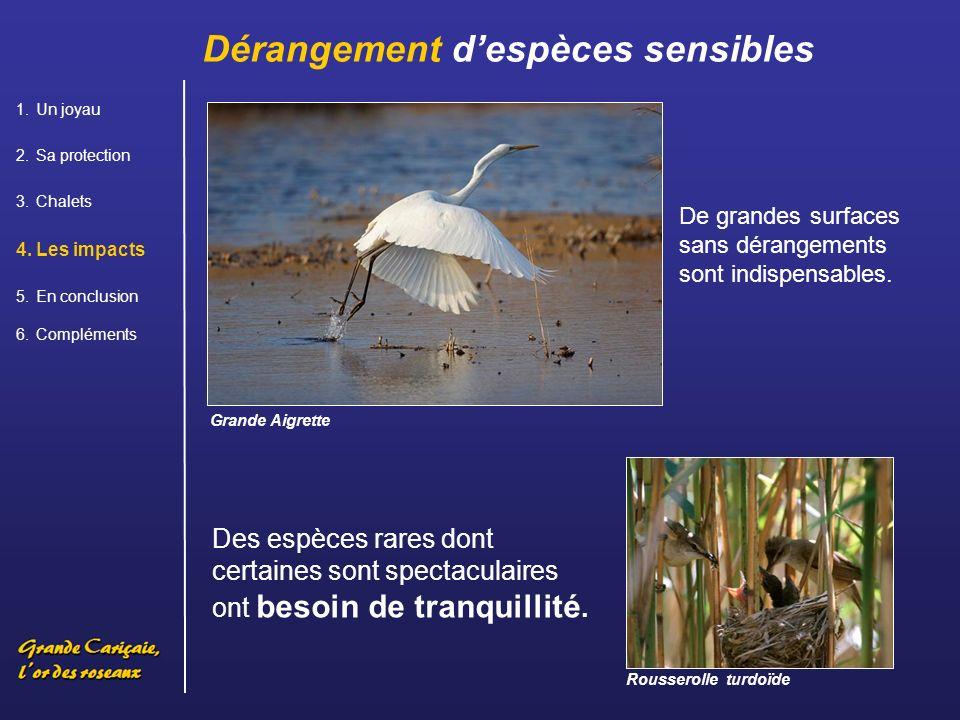 Des espèces rares dont certaines sont spectaculaires ont besoin de tranquillité.