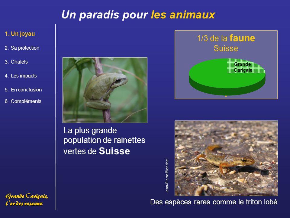 Un paradis pour les oiseaux 50 espèces doiseaux nicheurs sont menacées ou rares Grèbe huppé Héron pourpré 80% des espèces doiseaux de Suisse y ont déjà été observées Grande Cariçaie 1.Un joyau 2.Sa protection 3.Chalets 4.Les impacts 5.En conclusion 6.Compléments