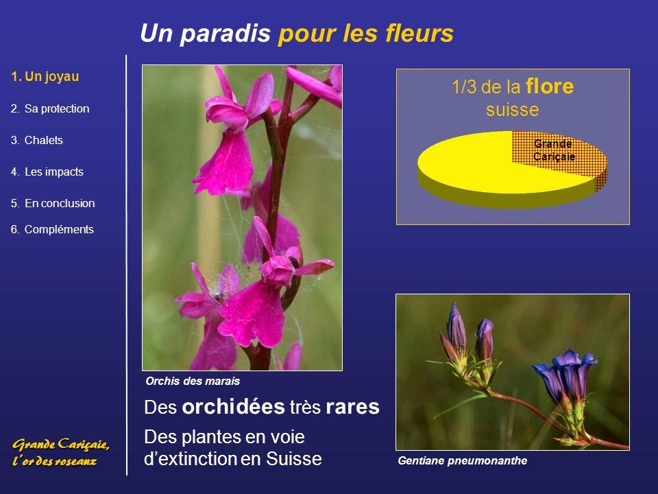 1/3 de la flore suisse.