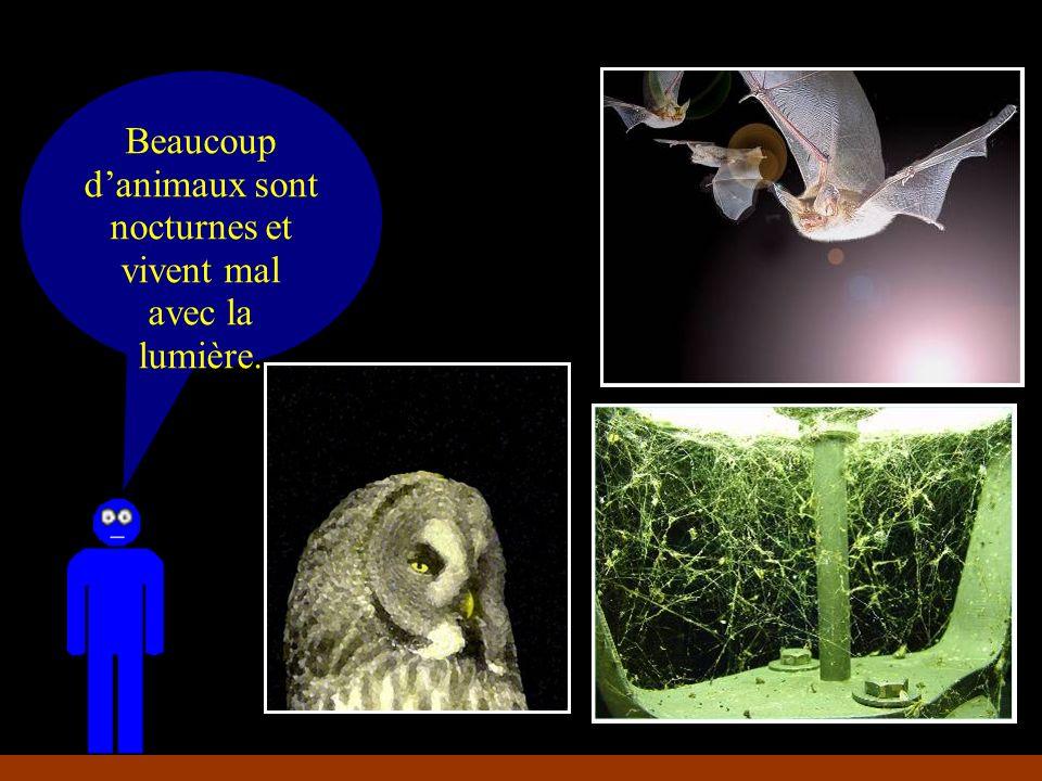Beaucoup danimaux sont nocturnes et vivent mal avec la lumière.