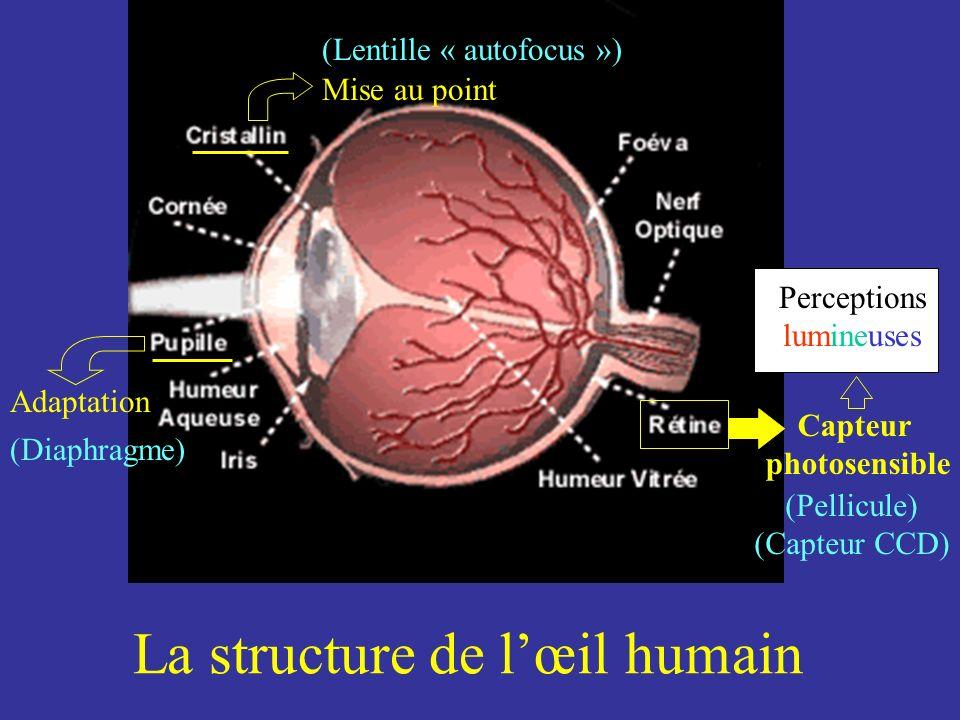 La structure de lœil humain Adaptation Perceptions lumineuses Mise au point Capteur photosensible (Diaphragme) (Lentille « autofocus ») (Pellicule) (C