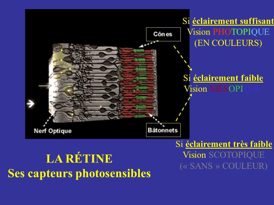 Si éclairement très faible Vision SCOTOPIQUE (« SANS » COULEUR) Si éclairement suffisant Vision PHOTOPIQUE (EN COULEURS) Si éclairement faible Vision