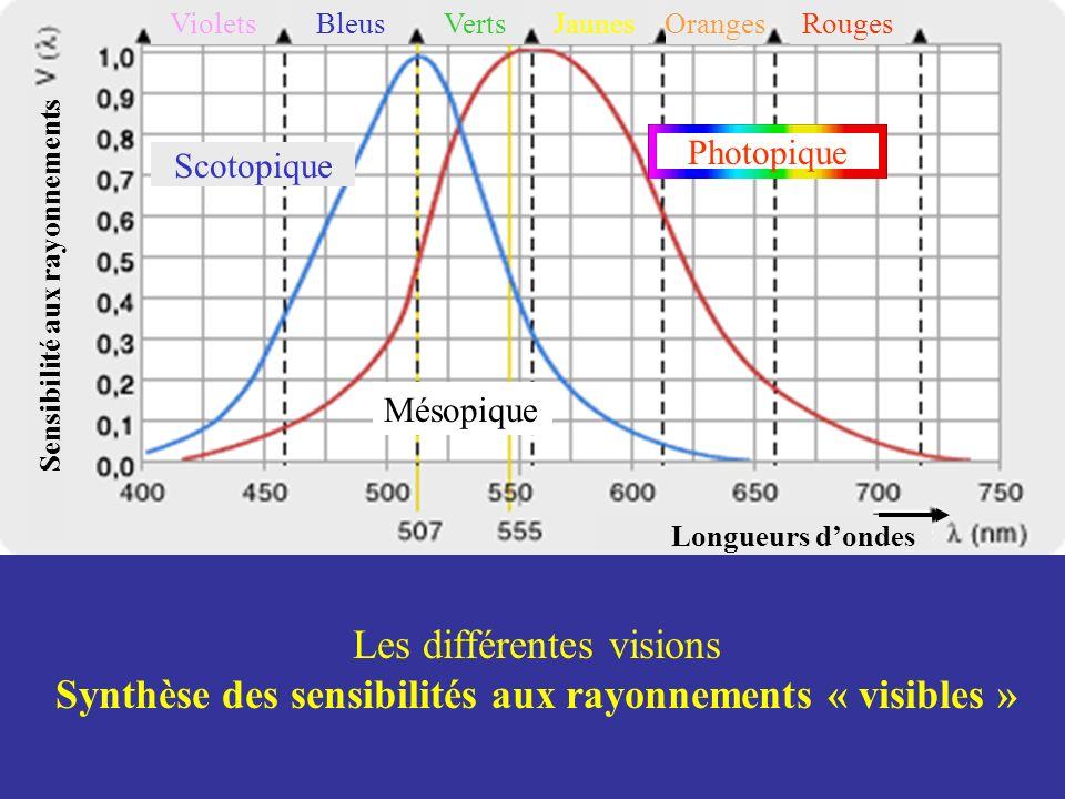 Les différentes visions Synthèse des sensibilités aux rayonnements « visibles » Sensibilité aux rayonnements Longueurs dondes Photopique Scotopique Ro