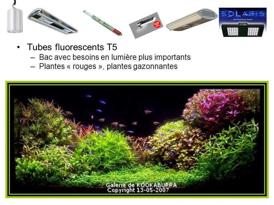 Tubes fluorescents T5 –Bac avec besoins en lumière plus importants –Plantes « rouges », plantes gazonnantes