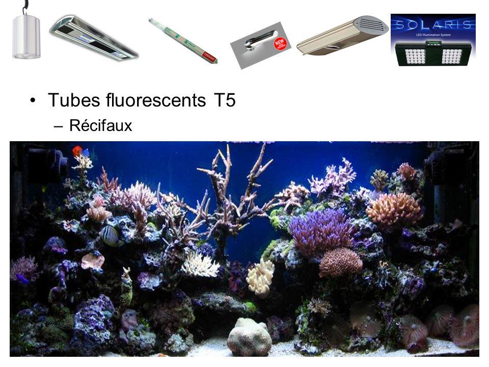 Tubes fluorescents T5 –Récifaux