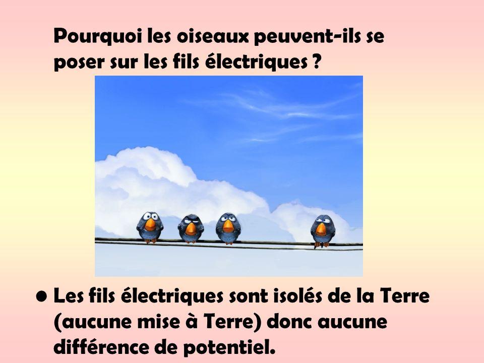 Pourquoi les oiseaux peuvent-ils se poser sur les fils électriques ? Les fils électriques sont isolés de la Terre (aucune mise à Terre) donc aucune di