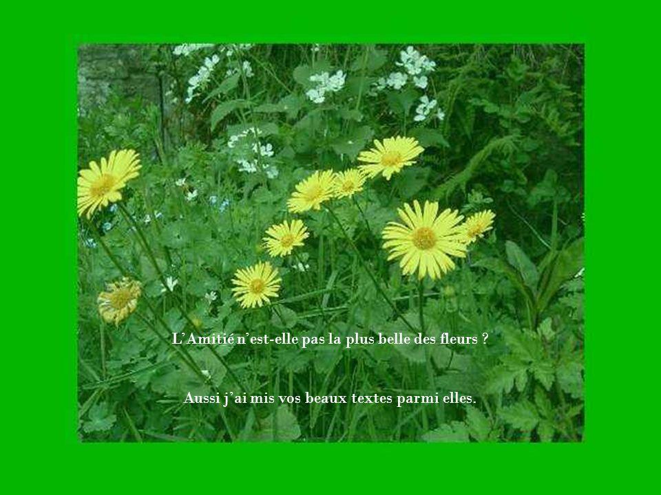 LAmitié nest-elle pas la plus belle des fleurs ? Aussi jai mis vos beaux textes parmi elles.