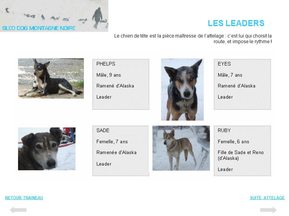 LES LEADERS RETOUR TRAINEAUSUITE ATTELAGE Le chien de tête est la pièce maîtresse de lattelage : cest lui qui choisit la route, et impose le rythme !
