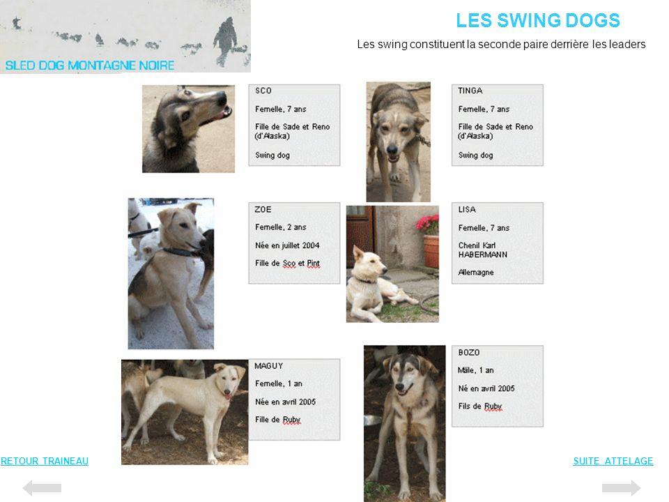 LES SWING DOGS RETOUR TRAINEAUSUITE ATTELAGE Les swing constituent la seconde paire derrière les leaders