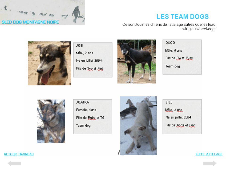 LES TEAM DOGS RETOUR TRAINEAUSUITE ATTELAGE Ce sont tous les chiens de lattelage autres que les lead, swing ou wheel-dogs