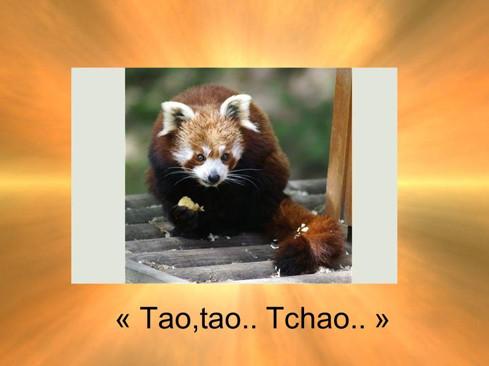 « Tao,tao.. Tchao.. »