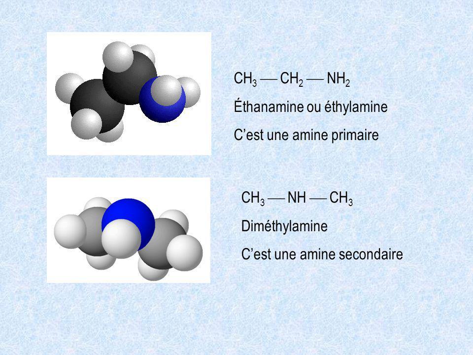 CH 3 CH 2 NH 2 Éthanamine ou éthylamine Cest une amine primaire CH 3 NH CH 3 Diméthylamine Cest une amine secondaire