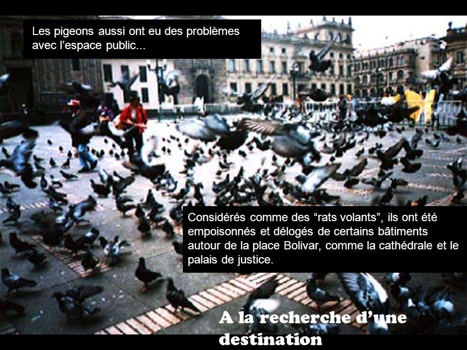 A la recherche dune destination Les pigeons aussi ont eu des problèmes avec lespace public...