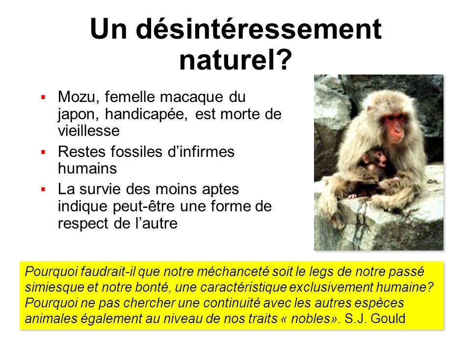 Un désintéressement naturel? Mozu, femelle macaque du japon, handicapée, est morte de vieillesse Restes fossiles dinfirmes humains La survie des moins