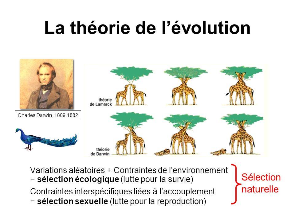 La théorie de lévolution Variations aléatoires + Contraintes de lenvironnement = sélection écologique (lutte pour la survie) Charles Darwin, 1809-1882 Contraintes interspécifiques liées à laccouplement = sélection sexuelle (lutte pour la reproduction) Sélection naturelle