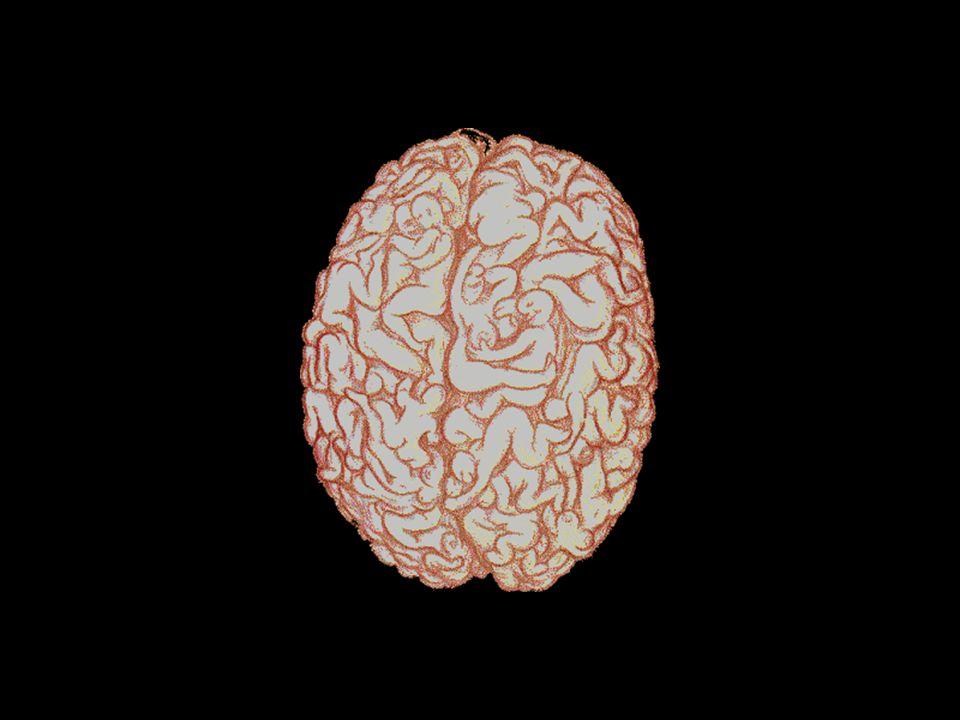 Pour continuer disséquons le mystère du fonctionnement du …..cerveau masculin: