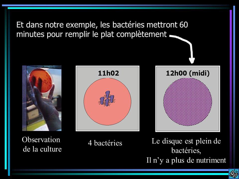 Et dans notre exemple, les bactéries mettront 60 minutes pour remplir le plat complètement 4 bactéries Le disque est plein de bactéries, Il ny a plus de nutriment Observation de la culture 11h0212h00 (midi)