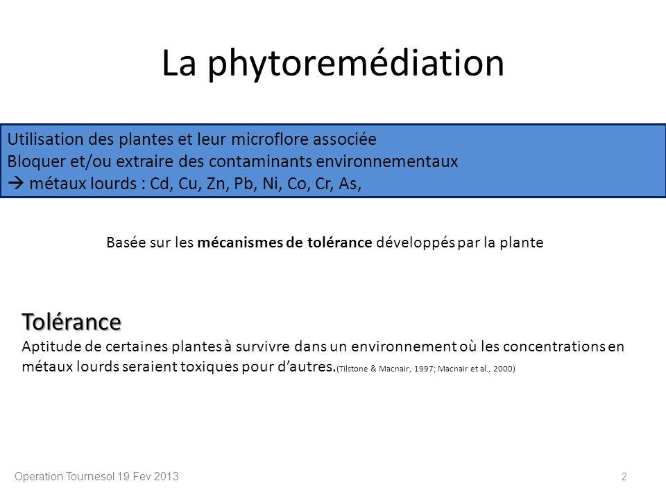 La phytoremédiation Operation Tournesol 19 Fev 2013 2 Utilisation des plantes et leur microflore associée Bloquer et/ou extraire des contaminants envi