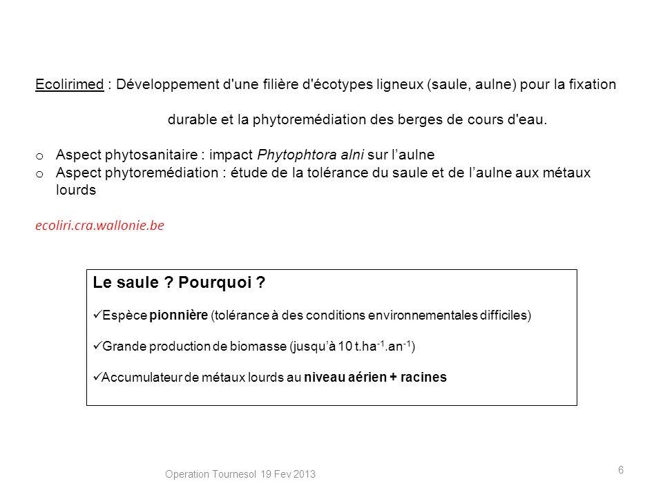 6 Le saule ? Pourquoi ? Espèce pionnière (tolérance à des conditions environnementales difficiles) Grande production de biomasse (jusquà 10 t.ha -1.an