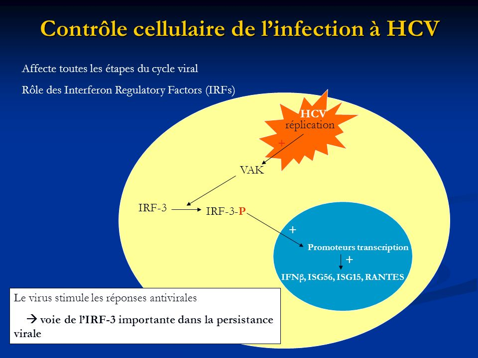 Contrôle cellulaire de linfection à HCV Affecte toutes les étapes du cycle viral Rôle des Interferon Regulatory Factors (IRFs) IRF-3 IRF-3-P HCV répli