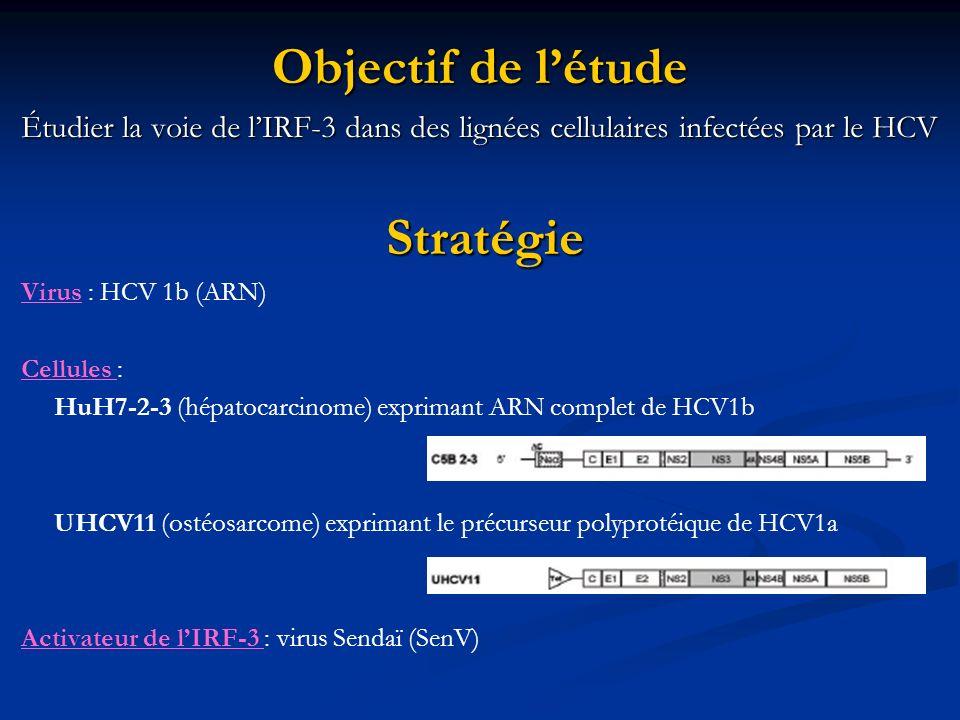 Objectif de létude Étudier la voie de lIRF-3 dans des lignées cellulaires infectées par le HCV Stratégie Virus : HCV 1b (ARN) Cellules : HuH7-2-3 (hép