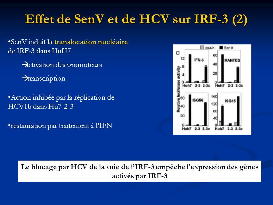 Effet de SenV et de HCV sur IRF-3 (2) SenV induit la translocation nucléaire de IRF-3 dans HuH7 activation des promoteurs transcription Action inhibée
