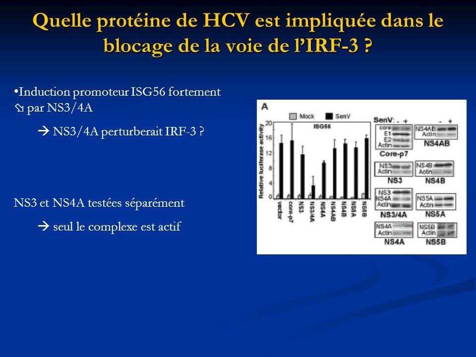 Quelle protéine de HCV est impliquée dans le blocage de la voie de lIRF-3 ? Induction promoteur ISG56 fortement par NS3/4A NS3/4A perturberait IRF-3 ?