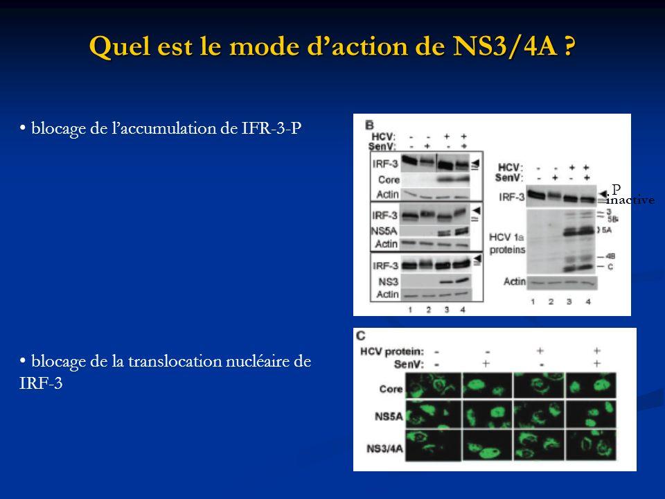 Quel est le mode daction de NS3/4A ? blocage de laccumulation de IFR-3-P blocage de la translocation nucléaire de IRF-3 P inactive