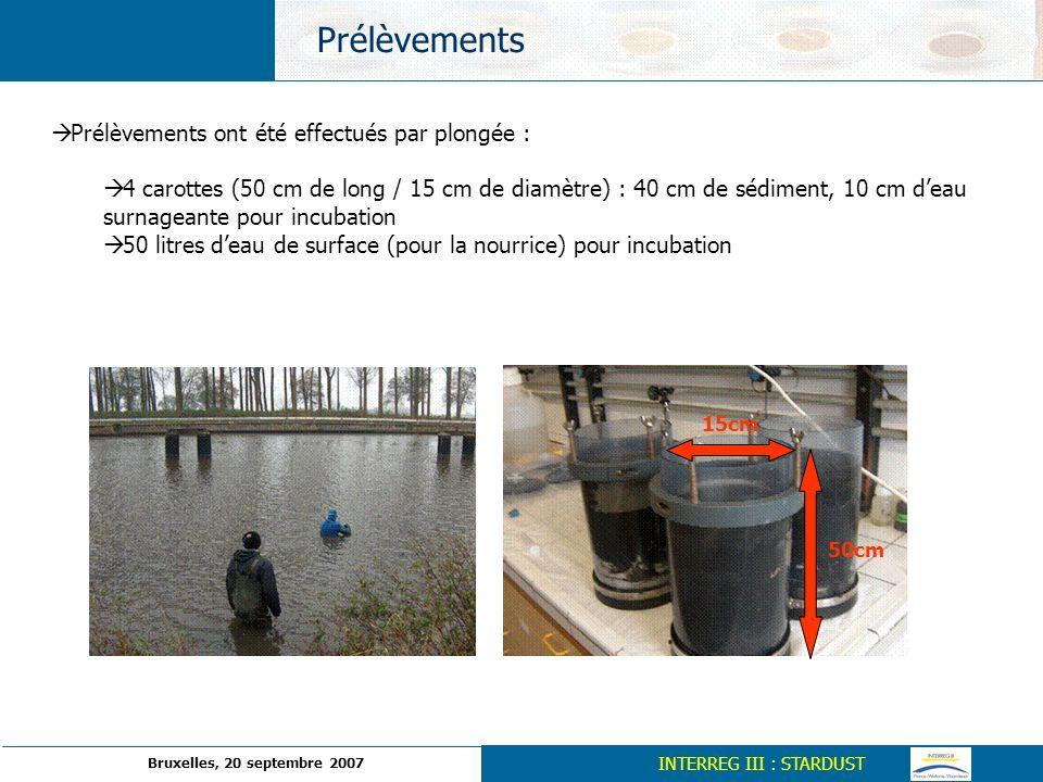 Prélèvements ont été effectués par plongée : 4 carottes (50 cm de long / 15 cm de diamètre) : 40 cm de sédiment, 10 cm deau surnageante pour incubatio