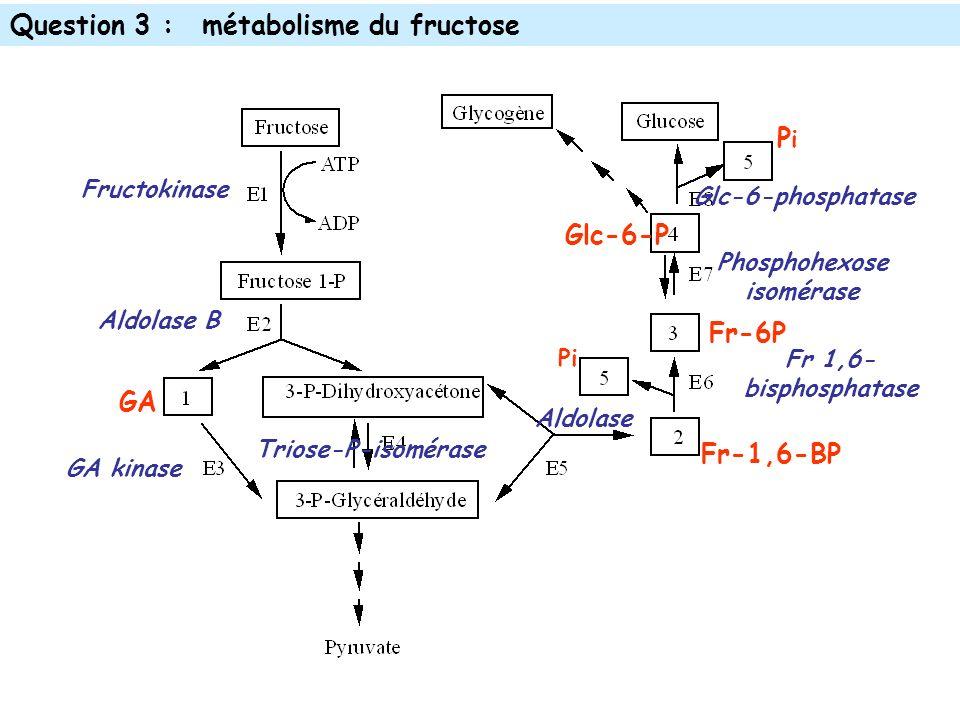 Question 3 :métabolisme du fructose Fructokinase Aldolase B GA kinase Aldolase Triose-P-isomérase Phosphohexose isomérase GA Fr-1,6-BP Glc-6-phosphatase PiPi Pi Fr 1,6- bisphosphatase Glc-6-P Fr-6P