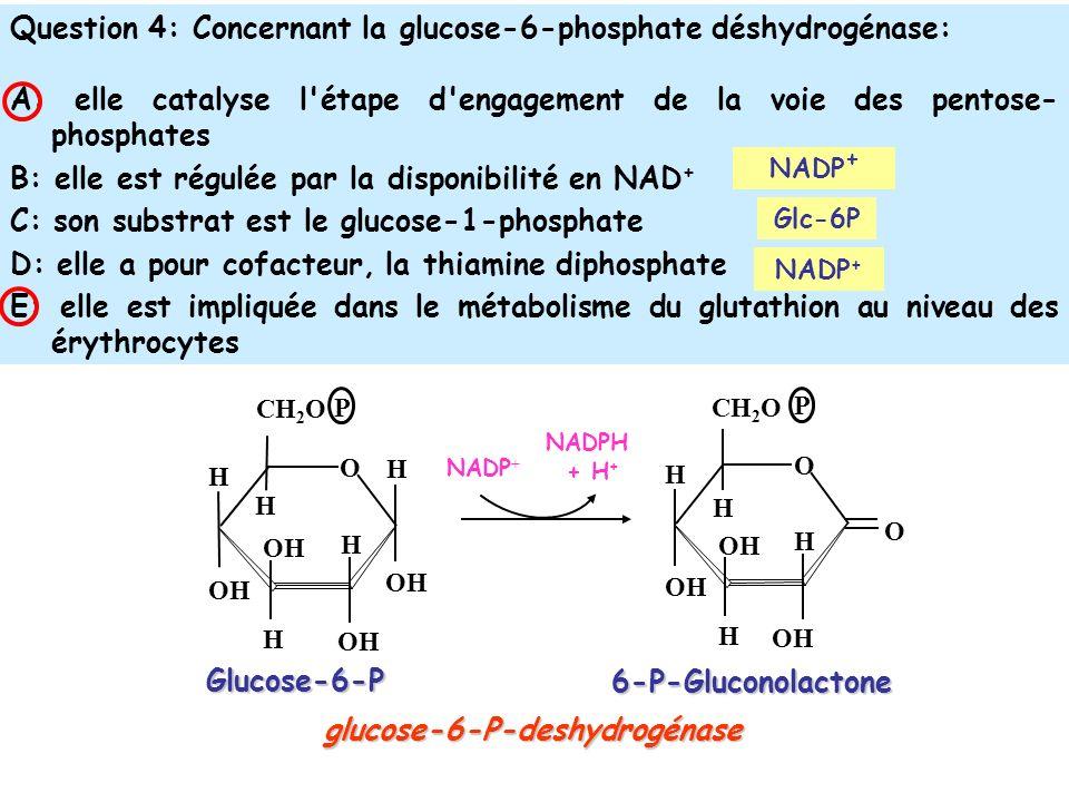 Question 4: Concernant la glucose-6-phosphate déshydrogénase: A: elle catalyse l étape d engagement de la voie des pentose- phosphates B: elle est régulée par la disponibilité en NAD + C: son substrat est le glucose-1-phosphate D: elle a pour cofacteur, la thiamine diphosphate E: elle est impliquée dans le métabolisme du glutathion au niveau des érythrocytes NADP + Glucose-6-P OH H O CH 2 O OH H H H H P H O CH 2 O OH H H H P O 6-P-Gluconolactone glucose-6-P-deshydrogénase NADPH + H + NADP + Glc-6P