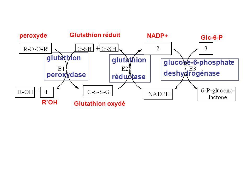 peroxyde ROH Glutathion réduit Glutathion oxydé glutathion peroxydase glutathion réductase NADP+ Glc-6-P glucose-6-phosphate deshydrogénase