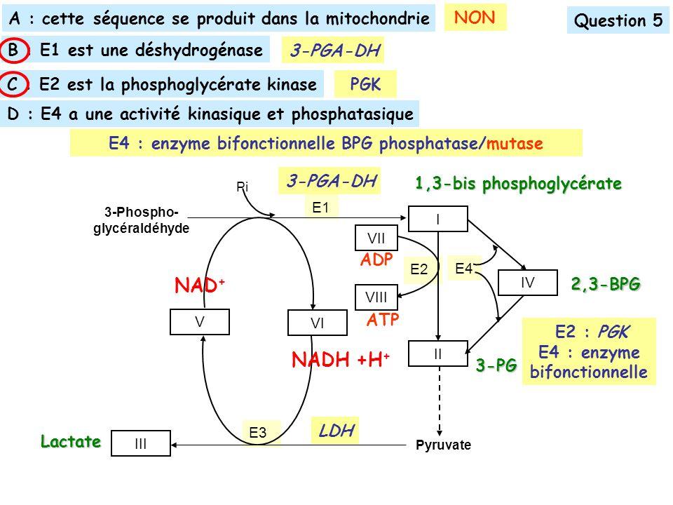 E3 E2 Pyruvate E1 E4 3-Phospho- glycéraldéhyde I II IV III Pi V VI VII VIII 1,3-bis phosphoglycérate NAD + NADH +H + ADP ATP 3-PG 2,3-BPG Lactate LDH B : E1 est une déshydrogénase Question 5 C : E2 est la phosphoglycérate kinase A : cette séquence se produit dans la mitochondrie E4 : enzyme bifonctionnelle BPG phosphatase/mutase D : E4 a une activité kinasique et phosphatasique NON 3-PGA-DH E2 : PGK E4 : enzyme bifonctionnelle PGK