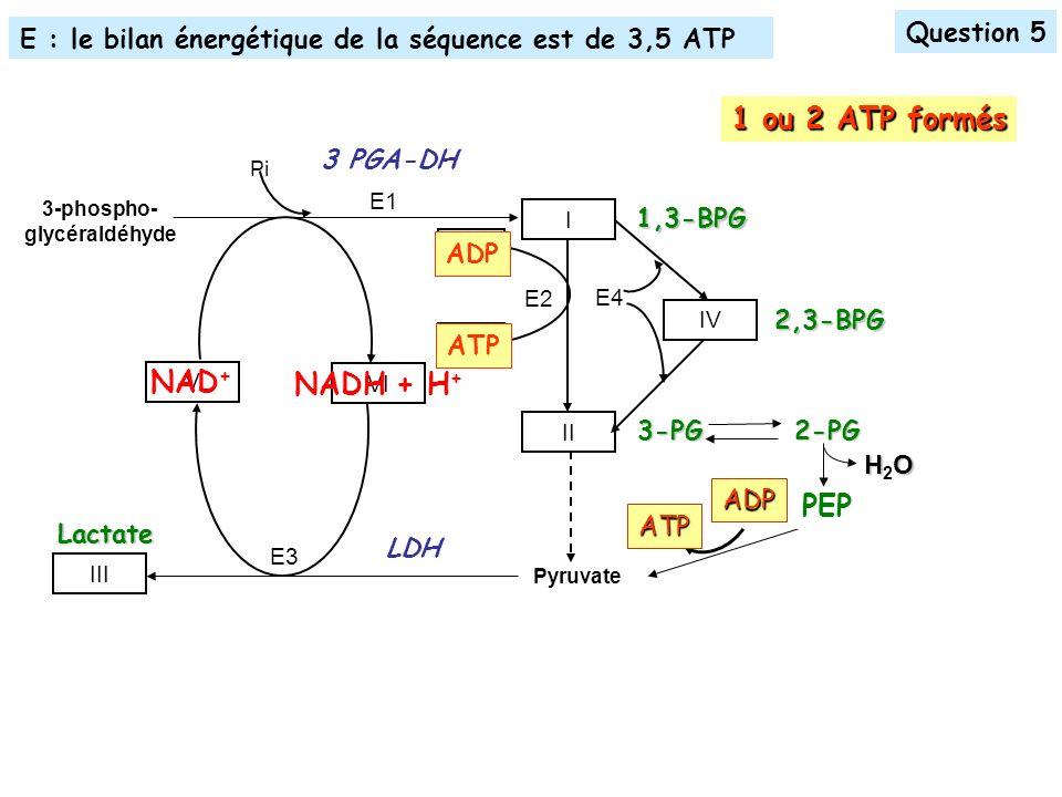 E3 E2 Pyruvate E1 E4 3-phospho- glycéraldéhyde I II IV III Pi V VI VII VIII 3 PGA-DH1,3-BPG NAD + NADH + H + ADP ATP 2,3-BPG Lactate LDH Question 5 E : le bilan énergétique de la séquence est de 3,5 ATP 1 ou 2 ATP formés 3-PG ADP ATP PEP2-PG HOH2OHOH2O