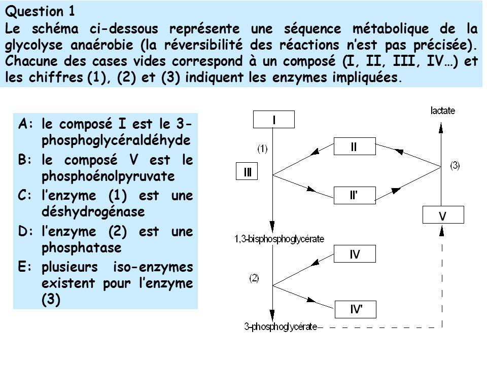 Question 1 Le schéma ci-dessous représente une séquence métabolique de la glycolyse anaérobie (la réversibilité des réactions nest pas précisée).