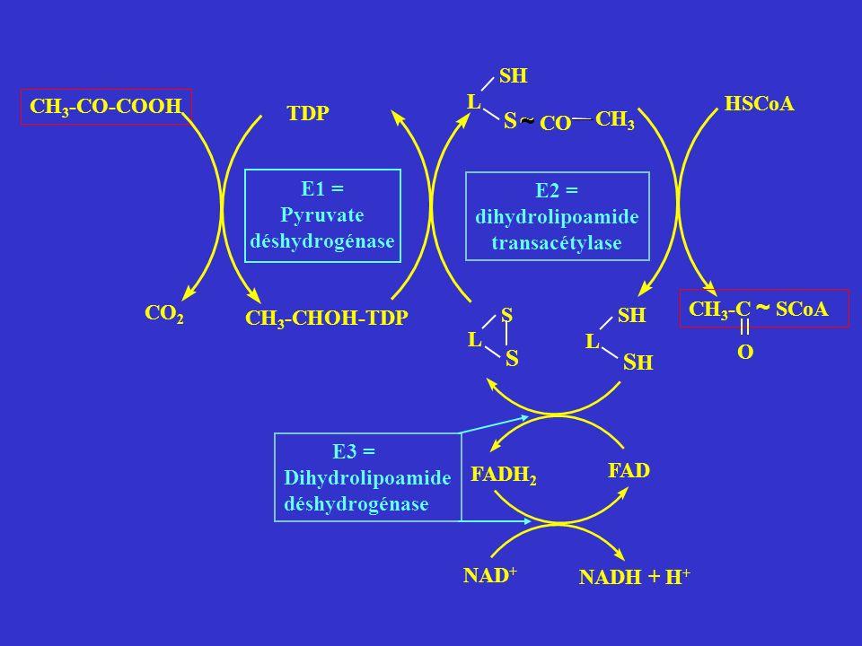 CH 3 -CO-COOH CO 2 TDP E1 = Pyruvate déshydrogénase E2 = dihydrolipoamide transacétylase CO CH 3 L SH S ~ HSCoA CH 3 -C ~ SCoA CH 3 -CHOH-TDP O FADH 2 L S S L SH SHSH FAD E3 = Dihydrolipoamide déshydrogénase NAD + NADH + H + ~