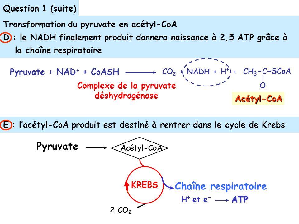E : lacétyl-CoA produit est destiné à rentrer dans le cycle de Krebs Question 1 (suite) Transformation du pyruvate en acétyl-CoA D : le NADH finalement produit donnera naissance à 2,5 ATP grâce à la chaîne respiratoire Complexe de la pyruvate déshydrogénase Pyruvate + NAD + + CoASH CO 2 + NADH + H + + CH 3 - C~SCoA O Acétyl-CoA 2 CO 2 Acétyl-CoA Chaîne respiratoire ATP KREBS Pyruvate H + et e -