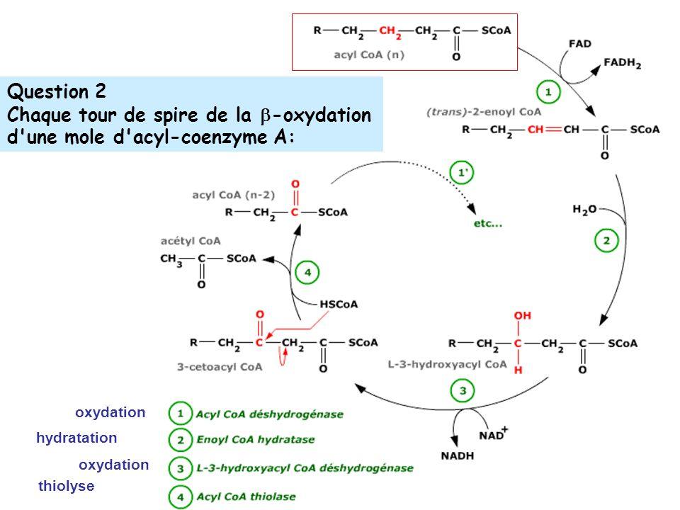 Question 2 Chaque tour de spire de la -oxydation d une mole d acyl-coenzyme A: oxydation hydratation thiolyse