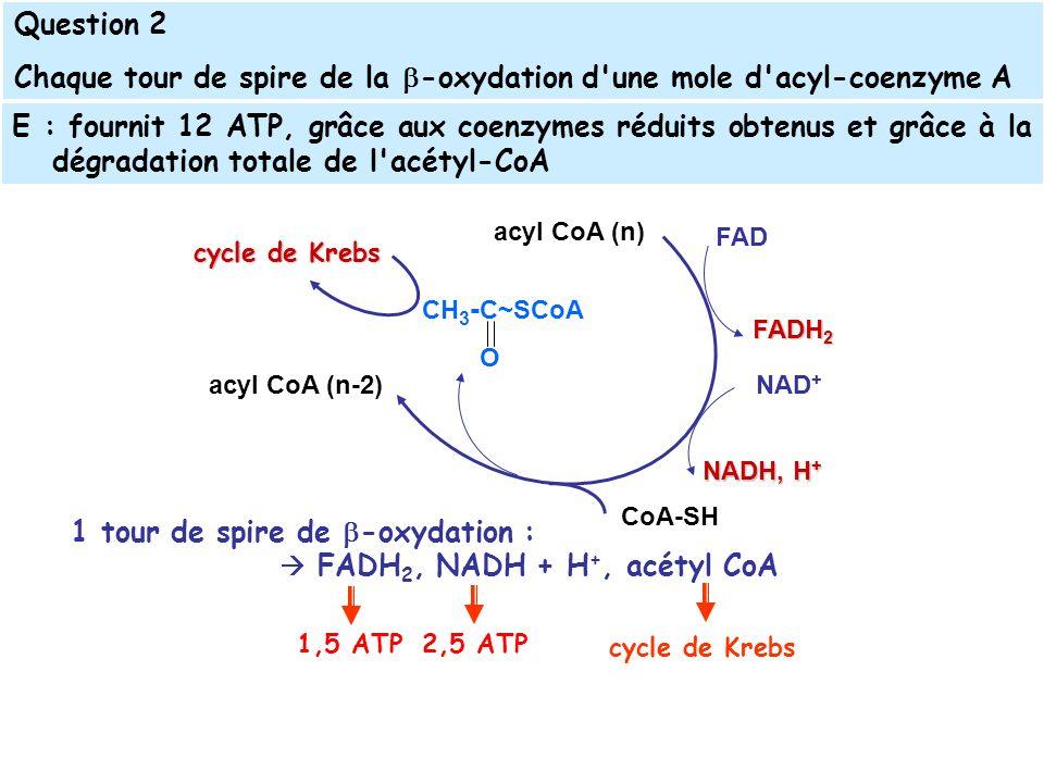 1 tour de spire de -oxydation : FADH 2, NADH + H +, acétyl CoA E : fournit 12 ATP, grâce aux coenzymes réduits obtenus et grâce à la dégradation totale de l acétyl-CoA acyl CoA (n) acyl CoA (n-2) CH 3 - C~SCoA O CoA-SH FAD FADH 2 NAD + NADH, H + cycle de Krebs Question 2 Chaque tour de spire de la -oxydation d une mole d acyl-coenzyme A cycle de Krebs 1,5 ATP 2,5 ATP