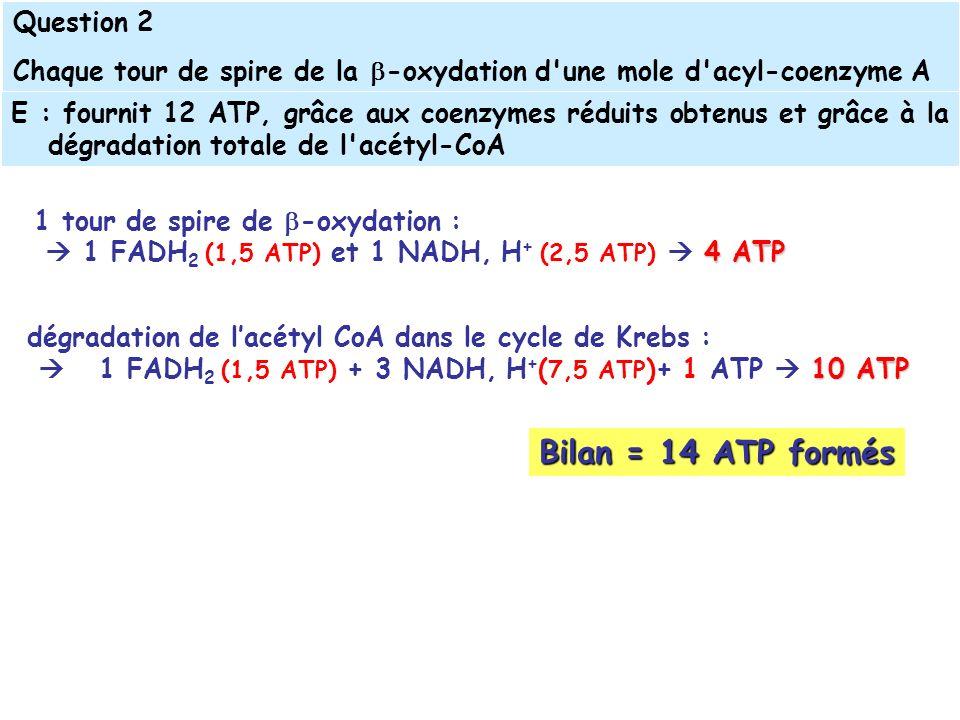 1 tour de spire de -oxydation : 4 ATP 1 FADH 2 (1,5 ATP) et 1 NADH, H + (2,5 ATP) 4 ATP Bilan = 14 ATP formés dégradation de lacétyl CoA dans le cycle de Krebs : 10 ATP 1 FADH 2 (1,5 ATP) + 3 NADH, H + ( 7,5 ATP )+ 1 ATP 10 ATP E : fournit 12 ATP, grâce aux coenzymes réduits obtenus et grâce à la dégradation totale de l acétyl-CoA Question 2 Chaque tour de spire de la -oxydation d une mole d acyl-coenzyme A