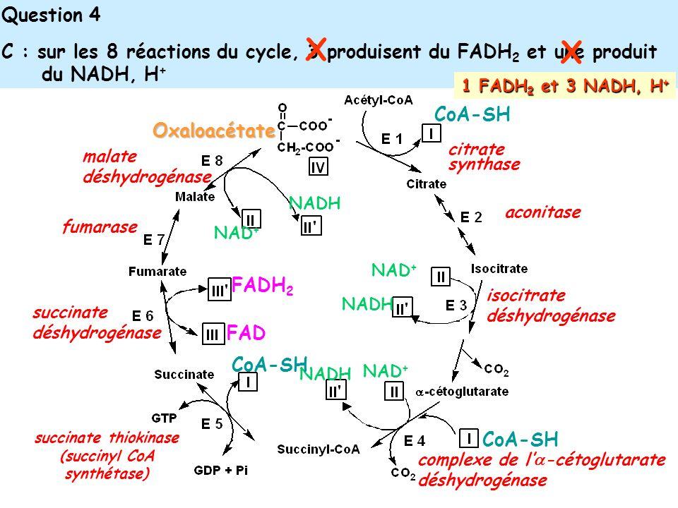 Question 4 C : sur les 8 réactions du cycle, 3 produisent du FADH 2 et une produit du NADH, H + citrate synthase Oxaloacétate aconitase NAD + NADH NAD + NADH NAD + NADH isocitrate déshydrogénase complexe de l -cétoglutarate déshydrogénase CoA-SH succinate thiokinase (succinyl CoA synthétase) FAD FADH 2 succinate déshydrogénase fumarase malate déshydrogénase X X 1 FADH 2 et 3 NADH, H +