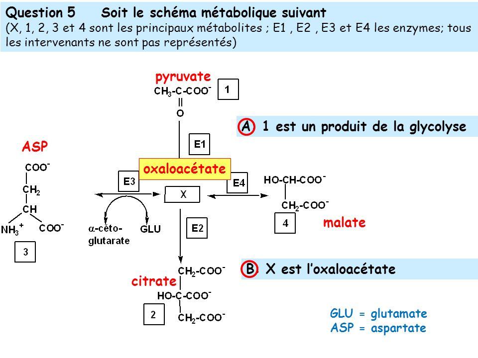 Question 5Soit le schéma métabolique suivant (X, 1, 2, 3 et 4 sont les principaux métabolites ; E1, E2, E3 et E4 les enzymes; tous les intervenants ne sont pas représentés) pyruvate oxaloacétate malate ASP citrate A: 1 est un produit de la glycolyse B: X est loxaloacétate GLU = glutamate ASP = aspartate
