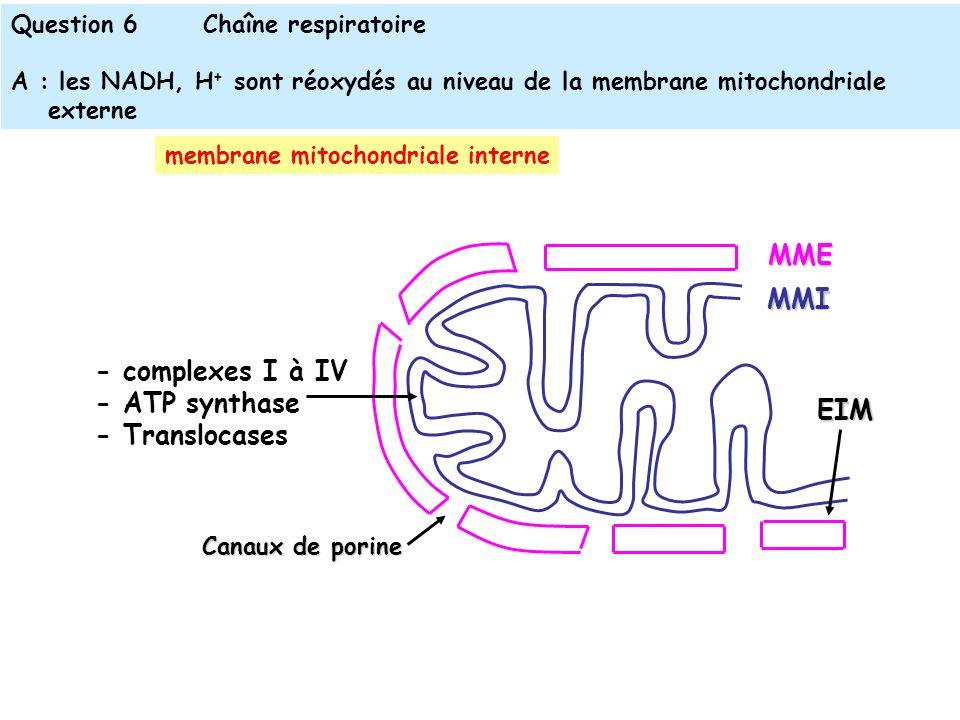 Question 6Chaîne respiratoire A : les NADH, H + sont réoxydés au niveau de la membrane mitochondriale externe MME MMI - complexes I à IV - ATP synthase - Translocases EIM Canaux de porine membrane mitochondriale interne
