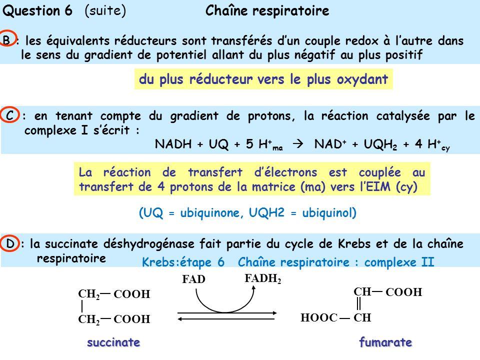 Question 6 (suite) Chaîne respiratoire B : les équivalents réducteurs sont transférés dun couple redox à lautre dans le sens du gradient de potentiel allant du plus négatif au plus positif du plus réducteur vers le plus oxydant C : en tenant compte du gradient de protons, la réaction catalysée par le complexe I sécrit : NADH + UQ + 5 H + ma NAD + + UQH 2 + 4 H + cy D : la succinate déshydrogénase fait partie du cycle de Krebs et de la chaîne respiratoire La réaction de transfert délectrons est couplée au transfert de 4 protons de la matrice (ma) vers lEIM (cy) (UQ = ubiquinone, UQH2 = ubiquinol) FAD FADH 2 CH 2 COOH fumaratesuccinate CH COOH HOOC Krebs:étape 6 Chaîne respiratoire : complexe II
