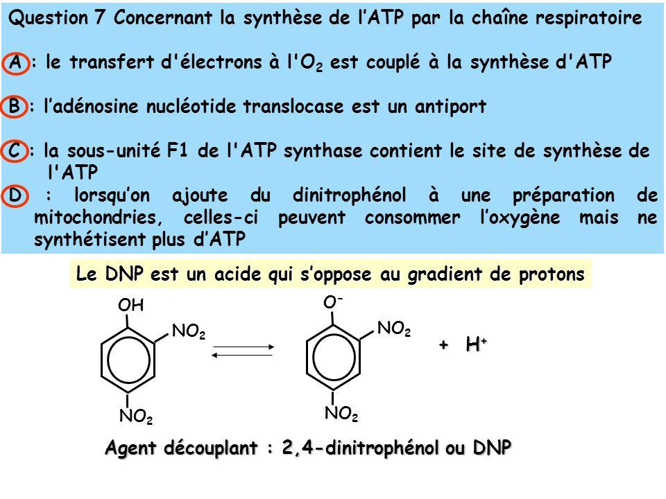 Question 7 Concernant la synthèse de lATP par la chaîne respiratoire A : le transfert d électrons à l O 2 est couplé à la synthèse d ATP B : ladénosine nucléotide translocase est un antiport C : la sous-unité F1 de l ATP synthase contient le site de synthèse de l ATP D : lorsquon ajoute du dinitrophénol à une préparation de mitochondries, celles-ci peuvent consommer loxygène mais ne synthétisent plus dATP Le DNP est un acide qui soppose au gradient de protons + H + + H + NO 2 OH NO 2 O-O- Agent découplant : 2,4-dinitrophénol ou DNP