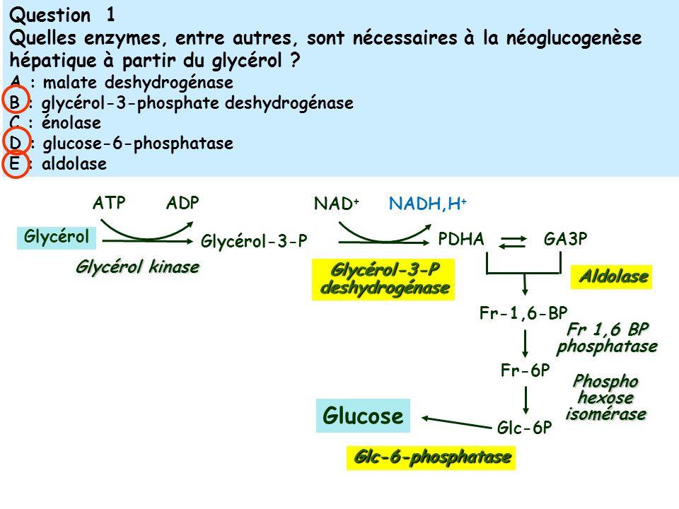 ATPADP Glycérol Glycérol kinase Glycérol-3-P NAD + NADH,H + PDHA Glc-6P Glycérol-3-Pdeshydrogénase GA3P Fr-1,6-BP Aldolase Fr-6P Fr 1,6 BP phosphatase Glucose Phospho hexose isomérase Glc-6-phosphatase Question 1 Quelles enzymes, entre autres, sont nécessaires à la néoglucogenèse hépatique à partir du glycérol .