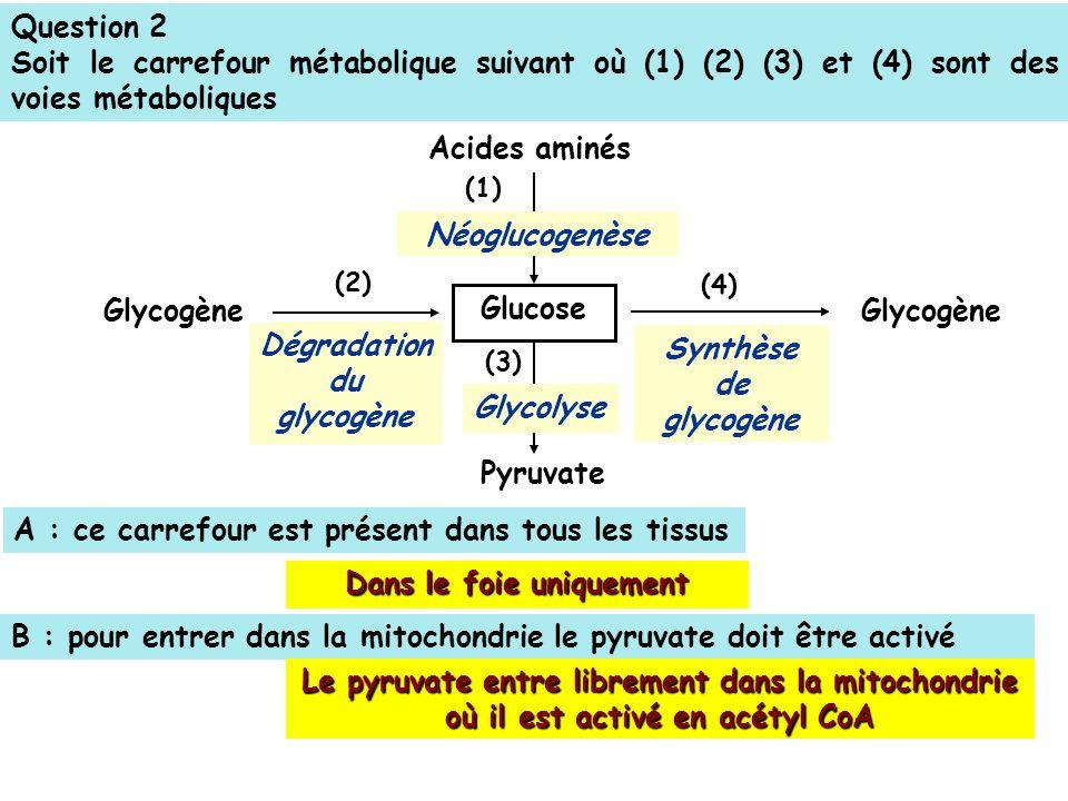 Question 2 Soit le carrefour métabolique suivant où (1) (2) (3) et (4) sont des voies métaboliques (4) (2) (3) Glucose Glycogène Acides aminés Pyruvate (1) Néoglucogenèse Dégradation du glycogène Glycolyse Synthèse de glycogène Glycogène A : ce carrefour est présent dans tous les tissus B : pour entrer dans la mitochondrie le pyruvate doit être activé Le pyruvate entre librement dans la mitochondrie où il est activé en acétyl CoA Dans le foie uniquement
